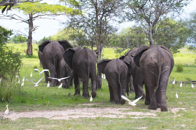 Home Safari su misura Elefanti