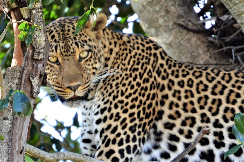 Safari su misura nel Serengeti National Park